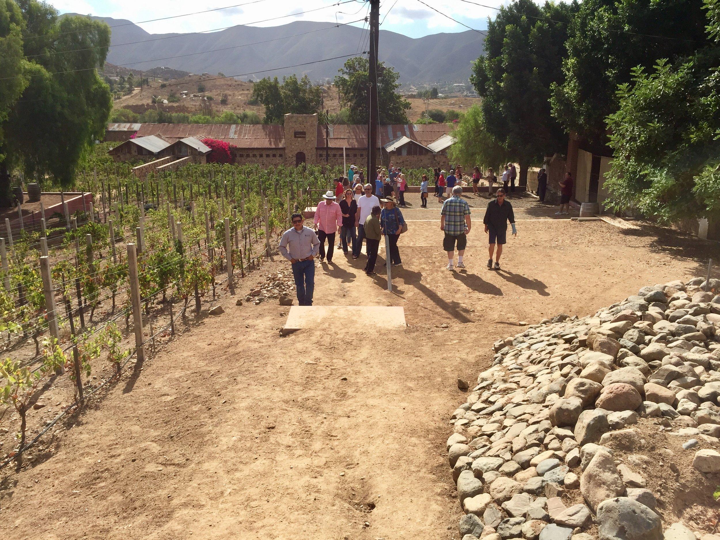 Vineyard trek through the Chardonnay vines at Casa de Piedra with Abimael