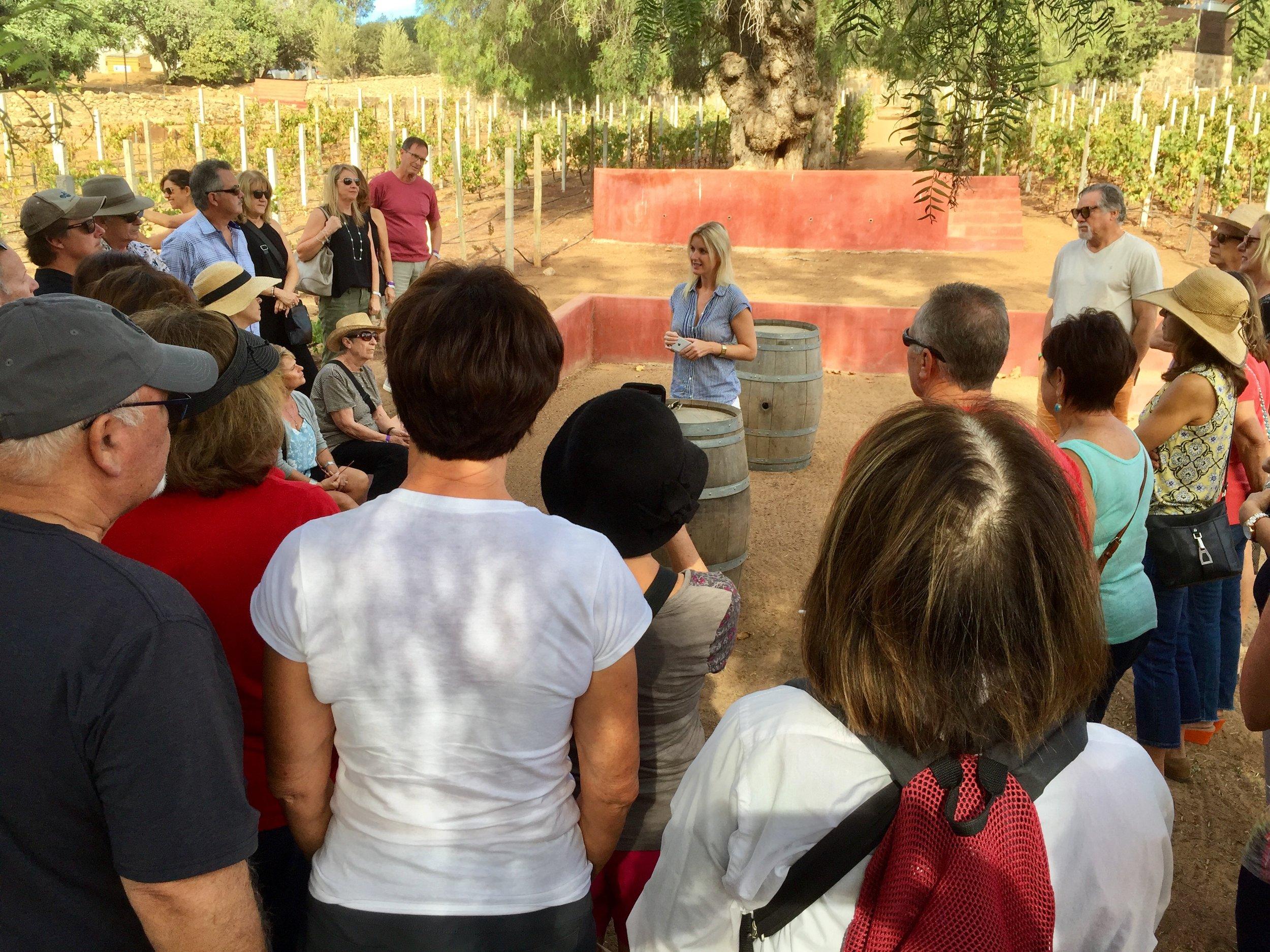 Petra in the vineyards at Casa de Piedra