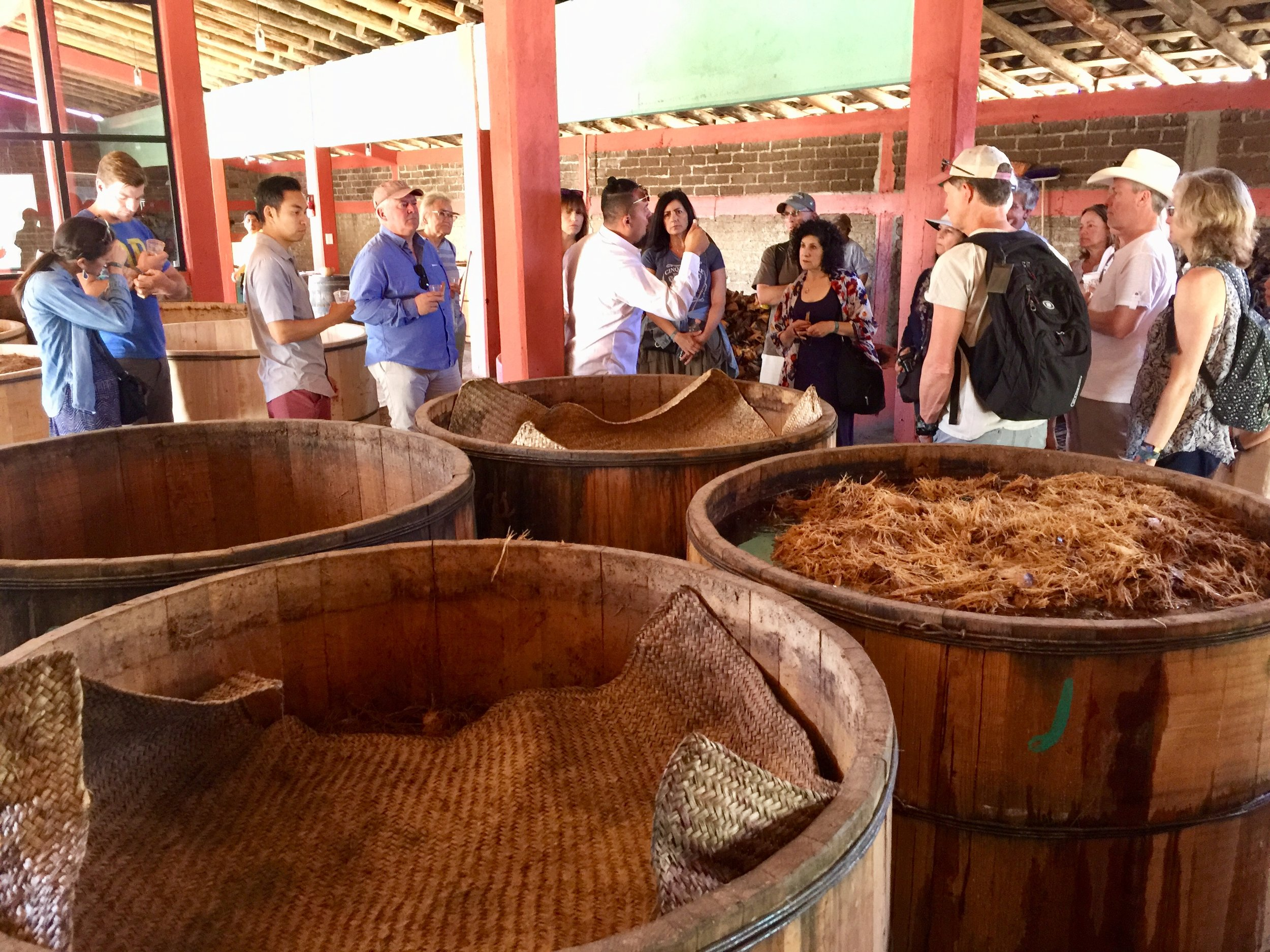 Roasted agave going through primary fermentation at Gracios a Dios Distillery.