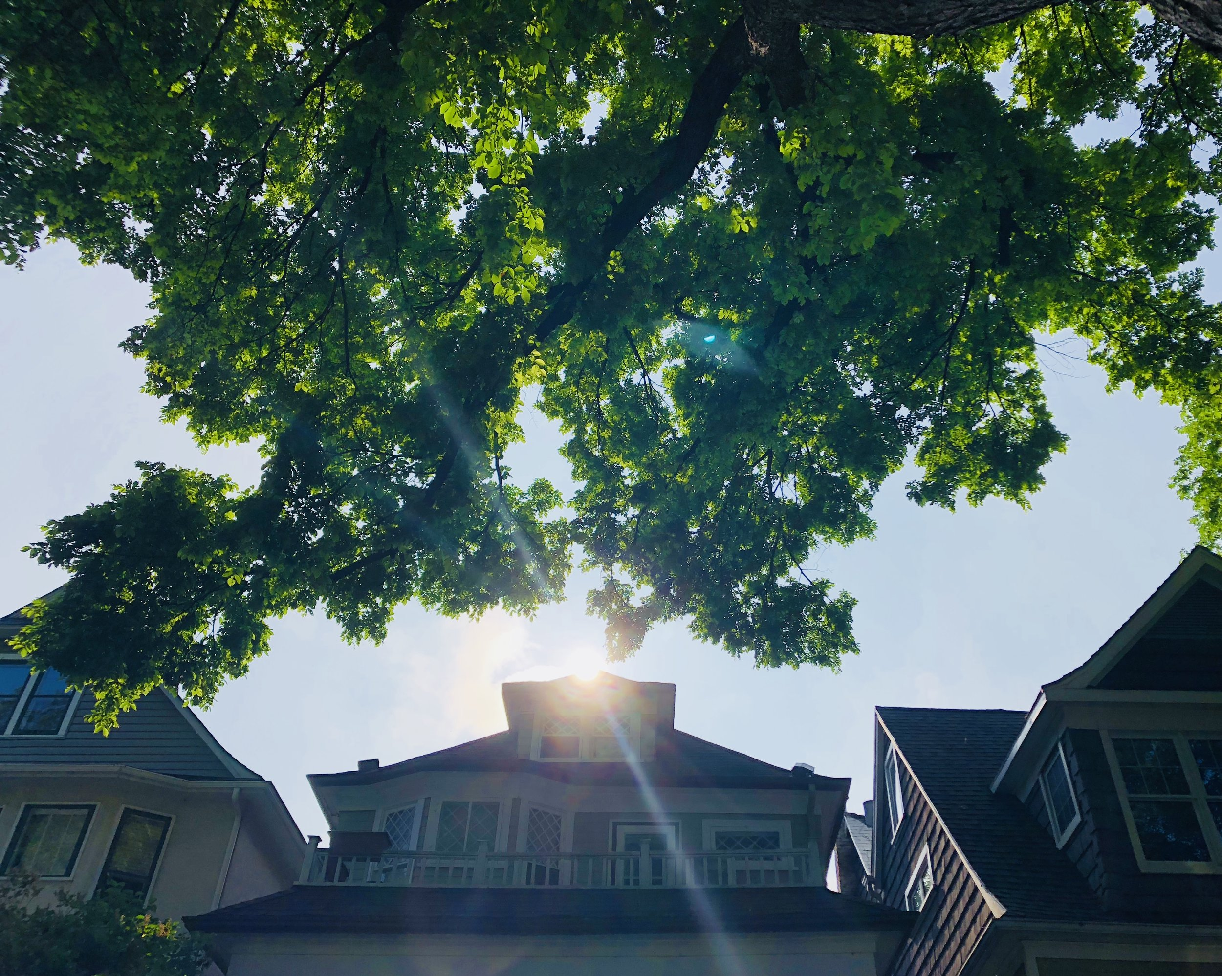 Creative non-Fiction - Treed: Walking in Canada's Urban Forests
