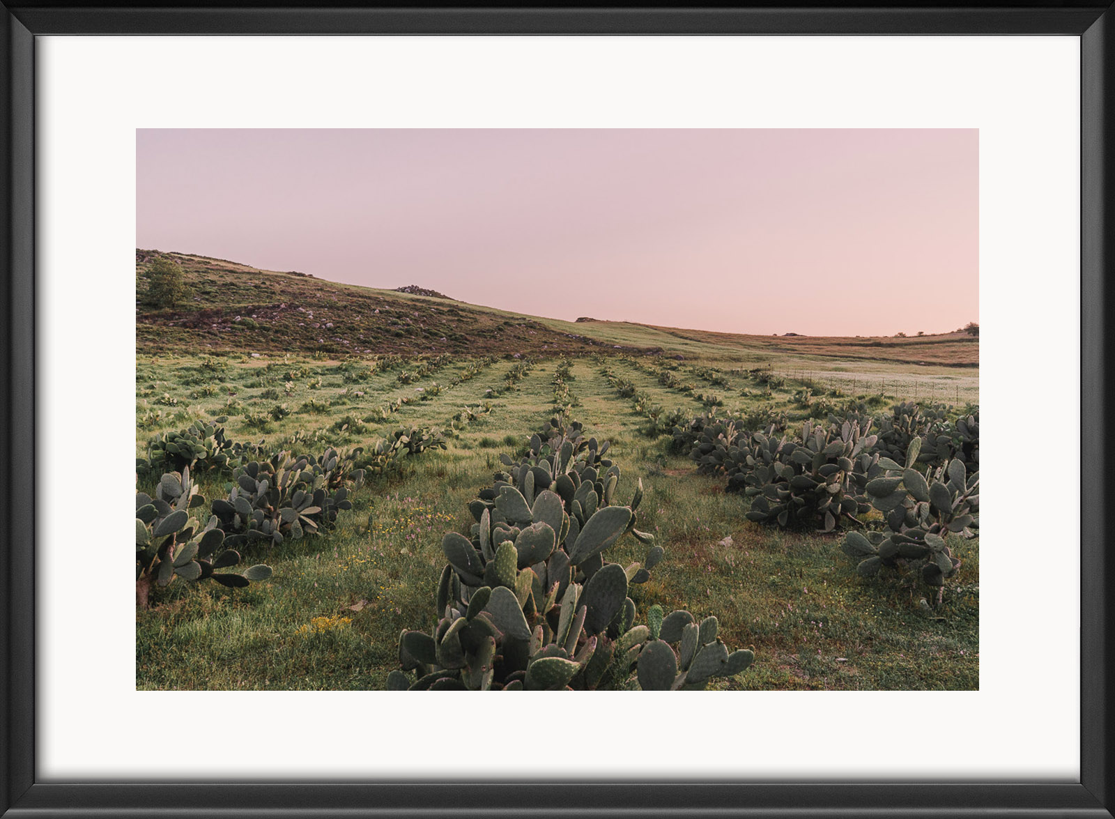 cretenature-prickly-pear-fields-frame.jpg
