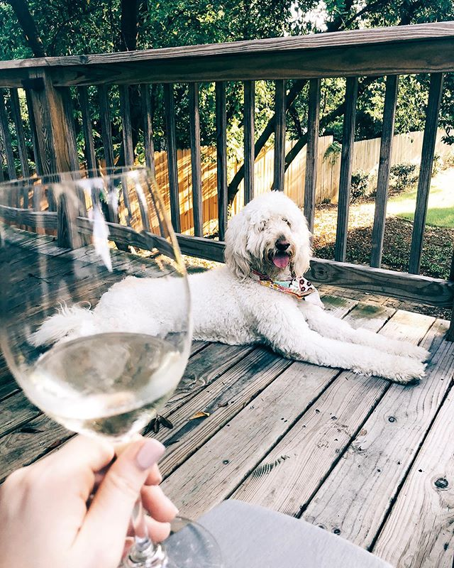 Did you know on Wednesday's @zasondevine has $4 glasses of select wines for Wine night?! 💁🏼♀️🍷yeah, you better believed we participated yesterday evening! Cute puppies are not included but encouraged to attend #winenight #goldendoodlesofinstagram #colafoodie #foodfinds #smallfinds #columbia #southcarolina