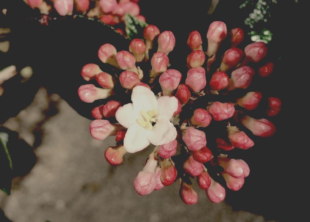 flower+cropped.jpg