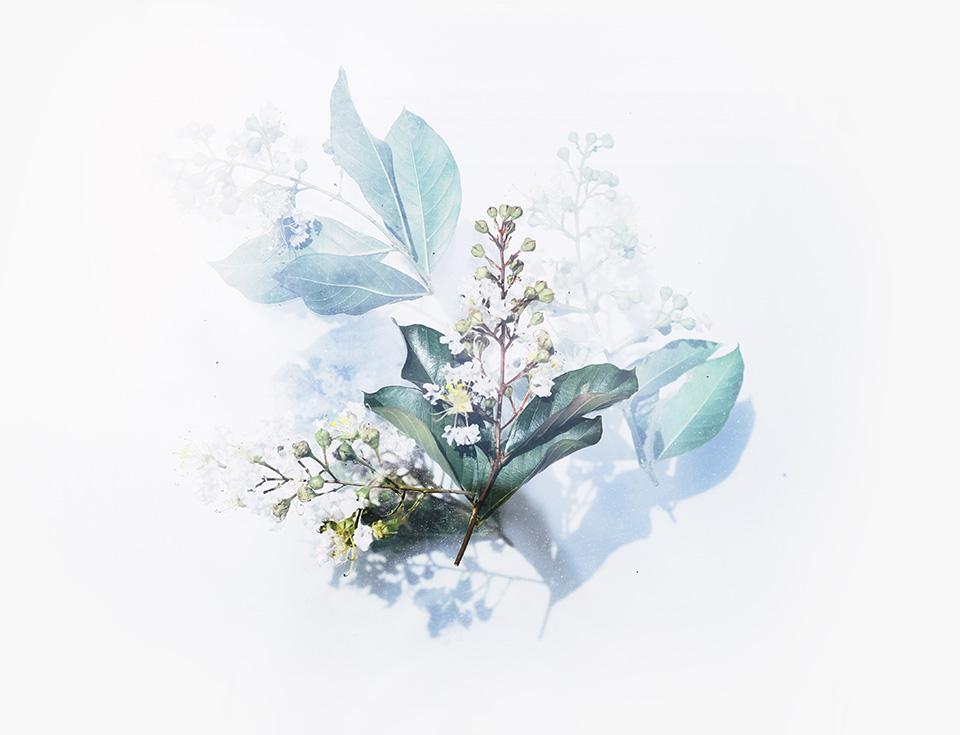 evie-botanic-photographer-tulsa-oklahoma-taylor-content.jpg