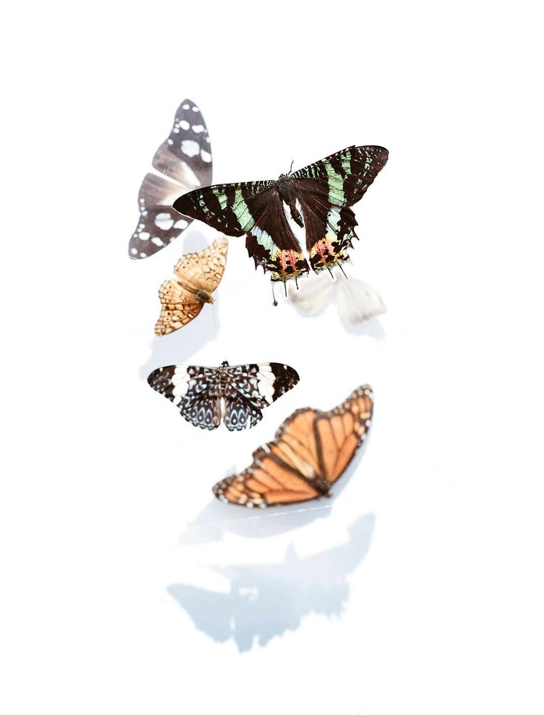evie-butterfly-photographer-tulsa-oklahoma-taylor-content.jpg