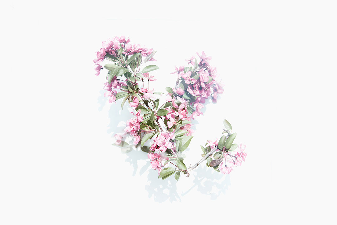 evie-flower-photographer-tulsa-oklahoma-taylor-content.jpg