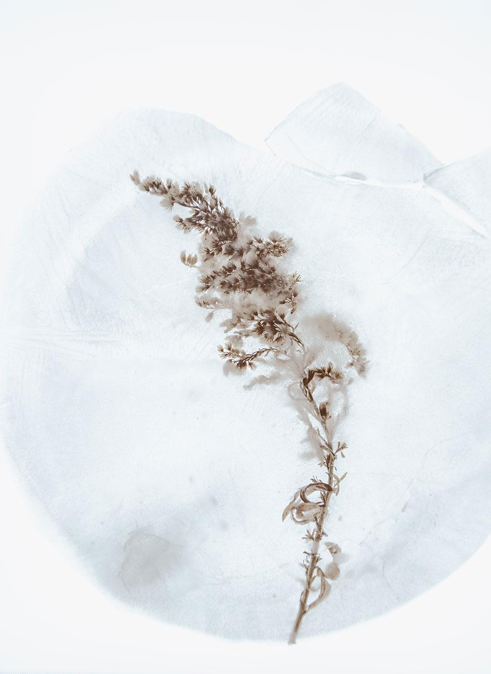 evie-furry-vegetation-photographer-tulsa-oklahoma-taylor-content.jpg