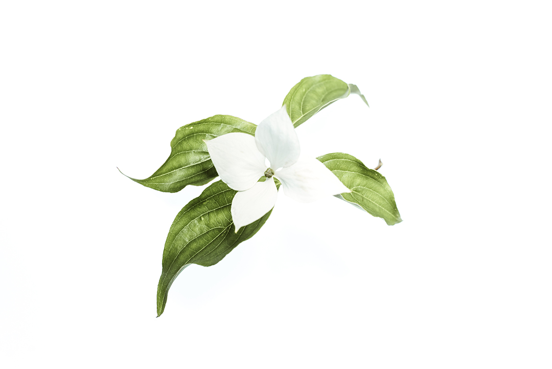 evie-greenery-photographer-tulsa-oklahoma-taylor-content.jpg