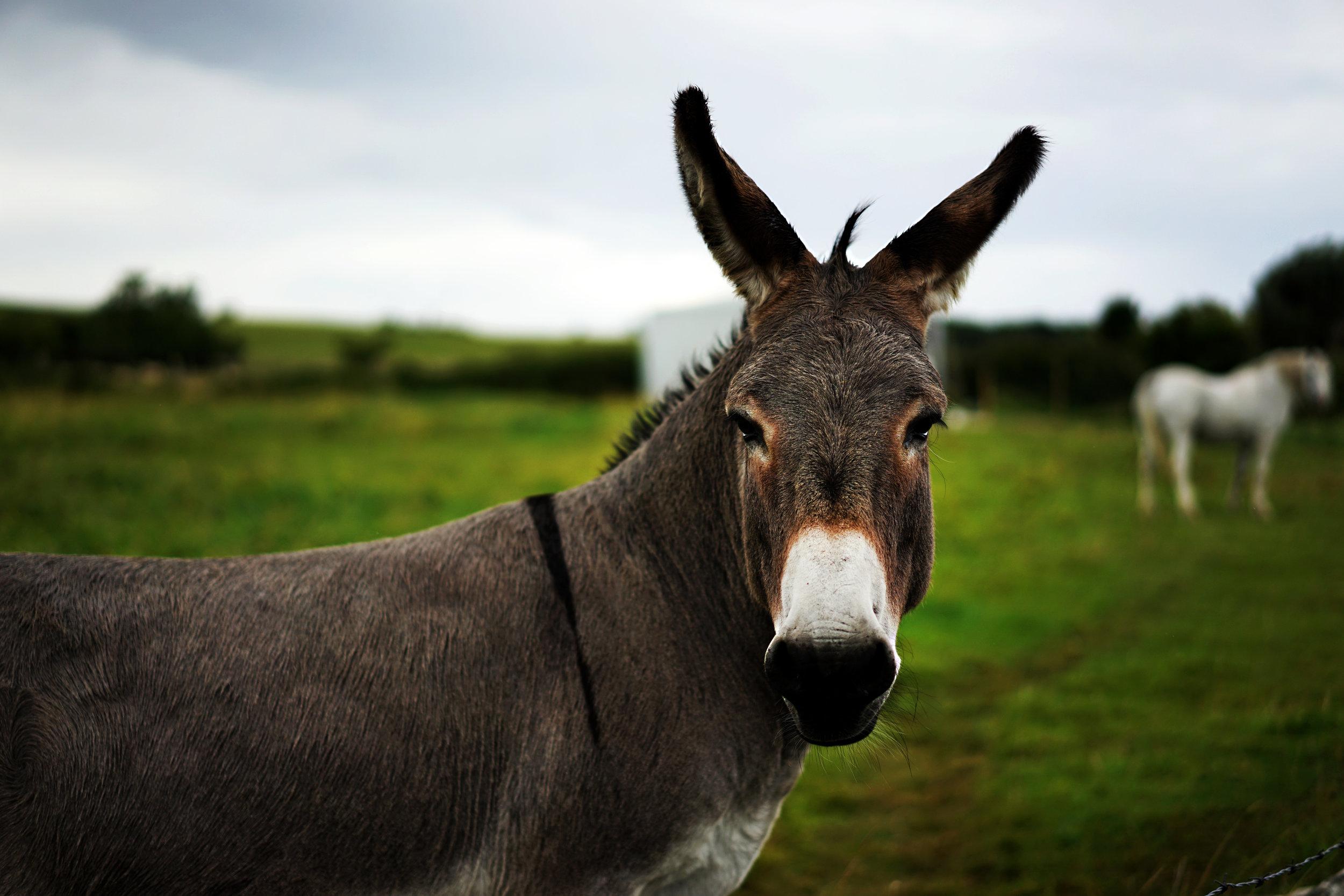 Token Donkey 01.jpg