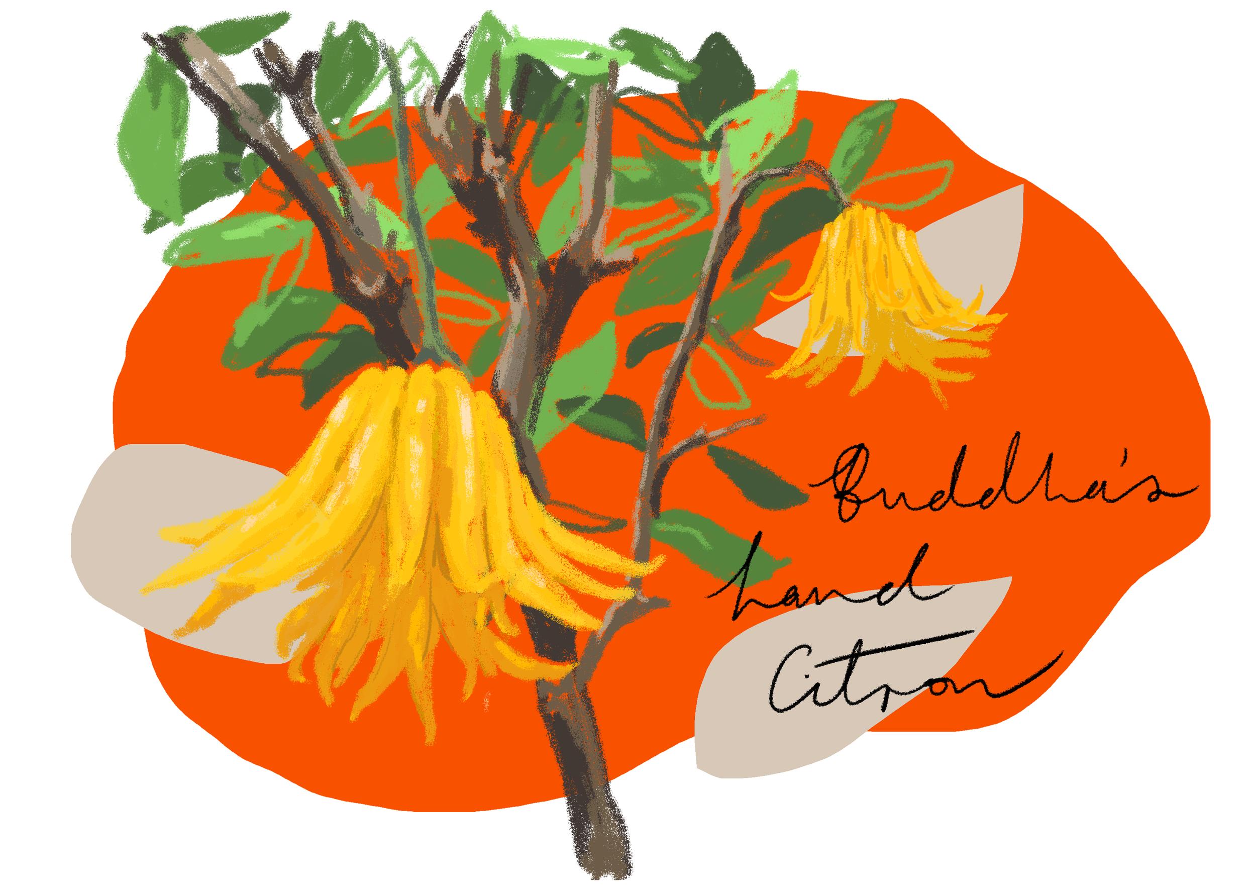 Citrus_2_Beige.png