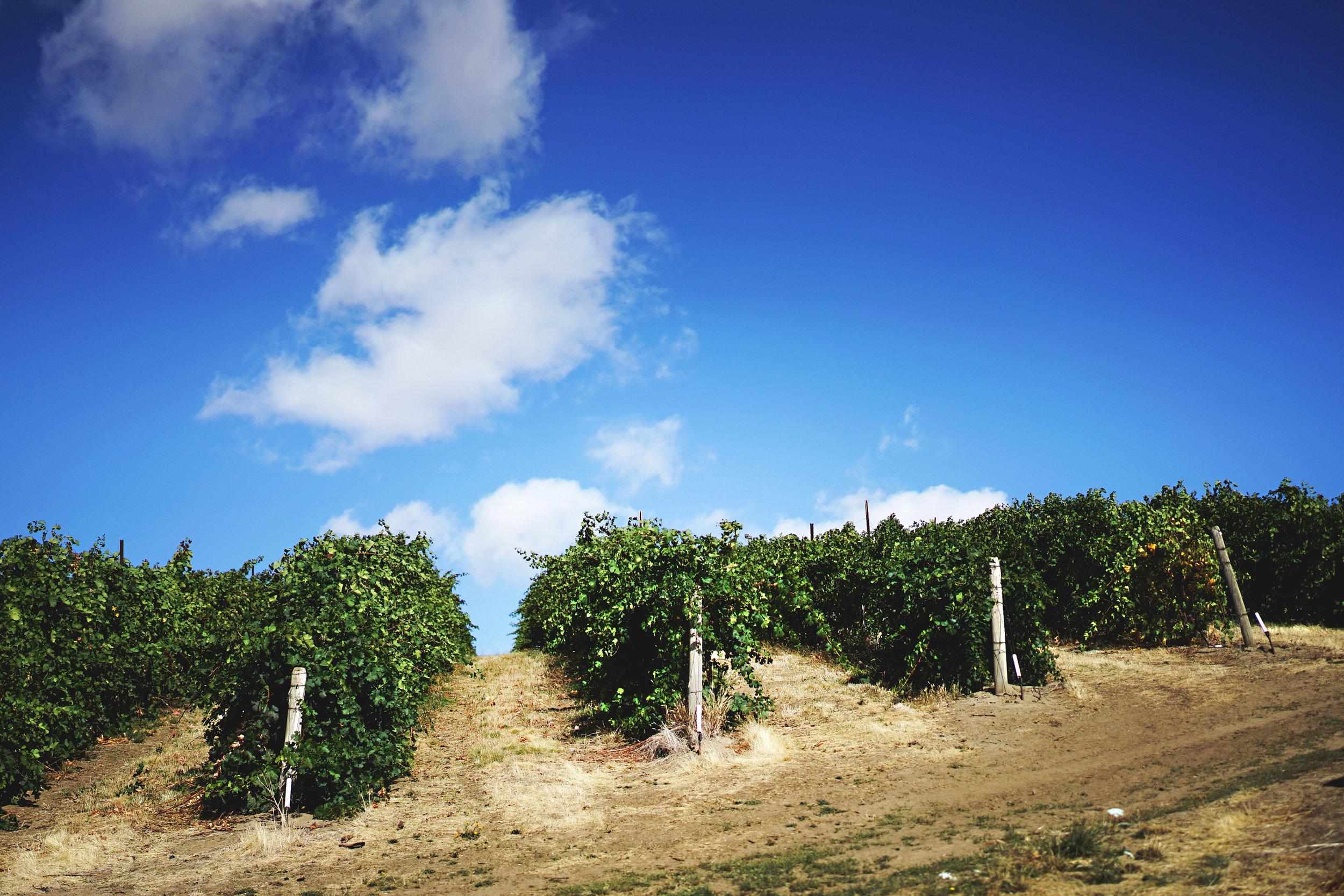 Vines 002(1).jpg