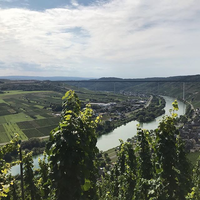 Thank you Germany and your winemakers for a wonderful week. Aside from a few issues with frost, hail and sunburn, 2019 is looking good, with harvest beginning imminently. Here is Ürziger Würzgarten (note the new bridge finally scheduled to open before the end of the year). And thank you @eatdrinkyas for being such a great travel companion!