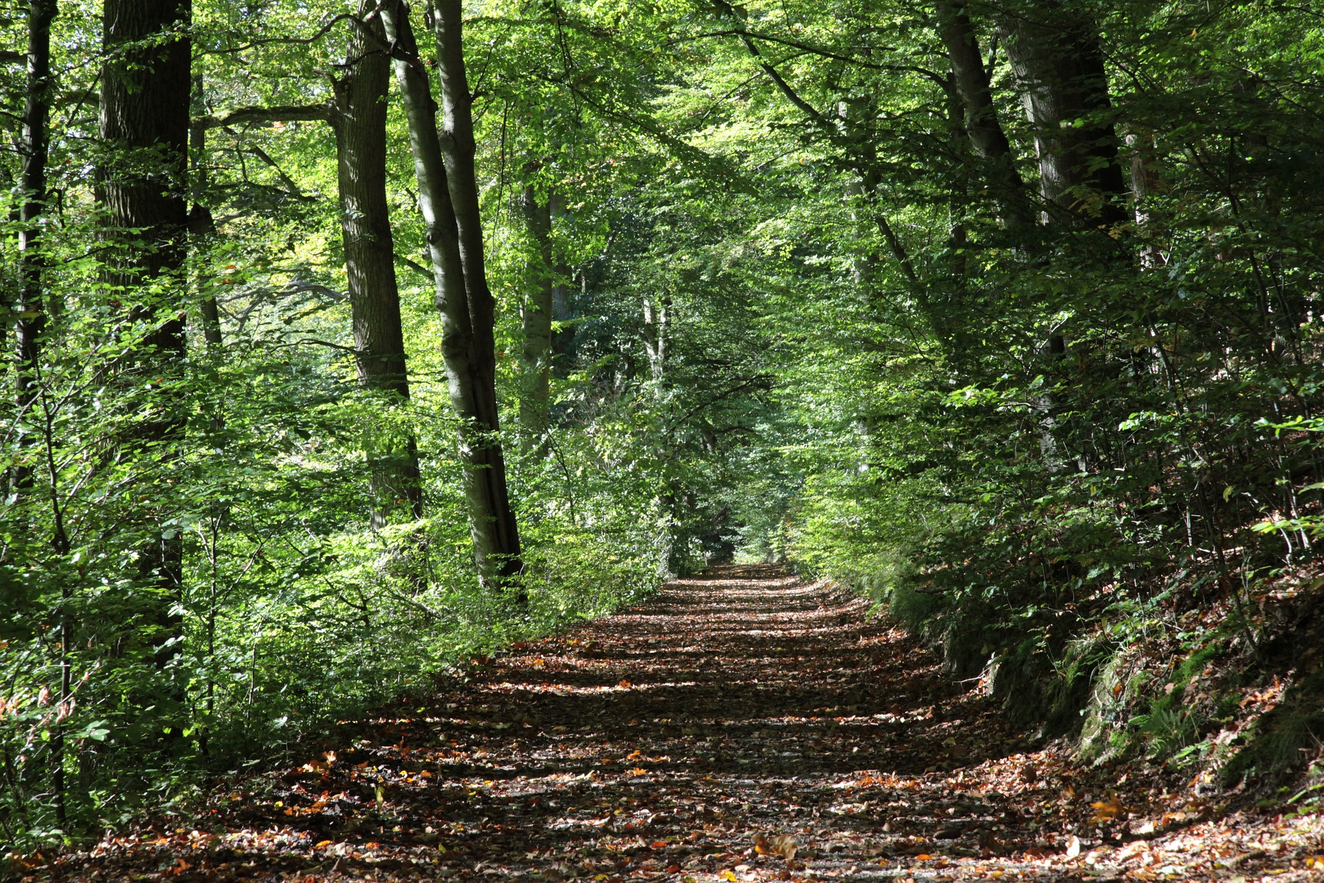 forest-path-pixabay2808216_1920.jpg
