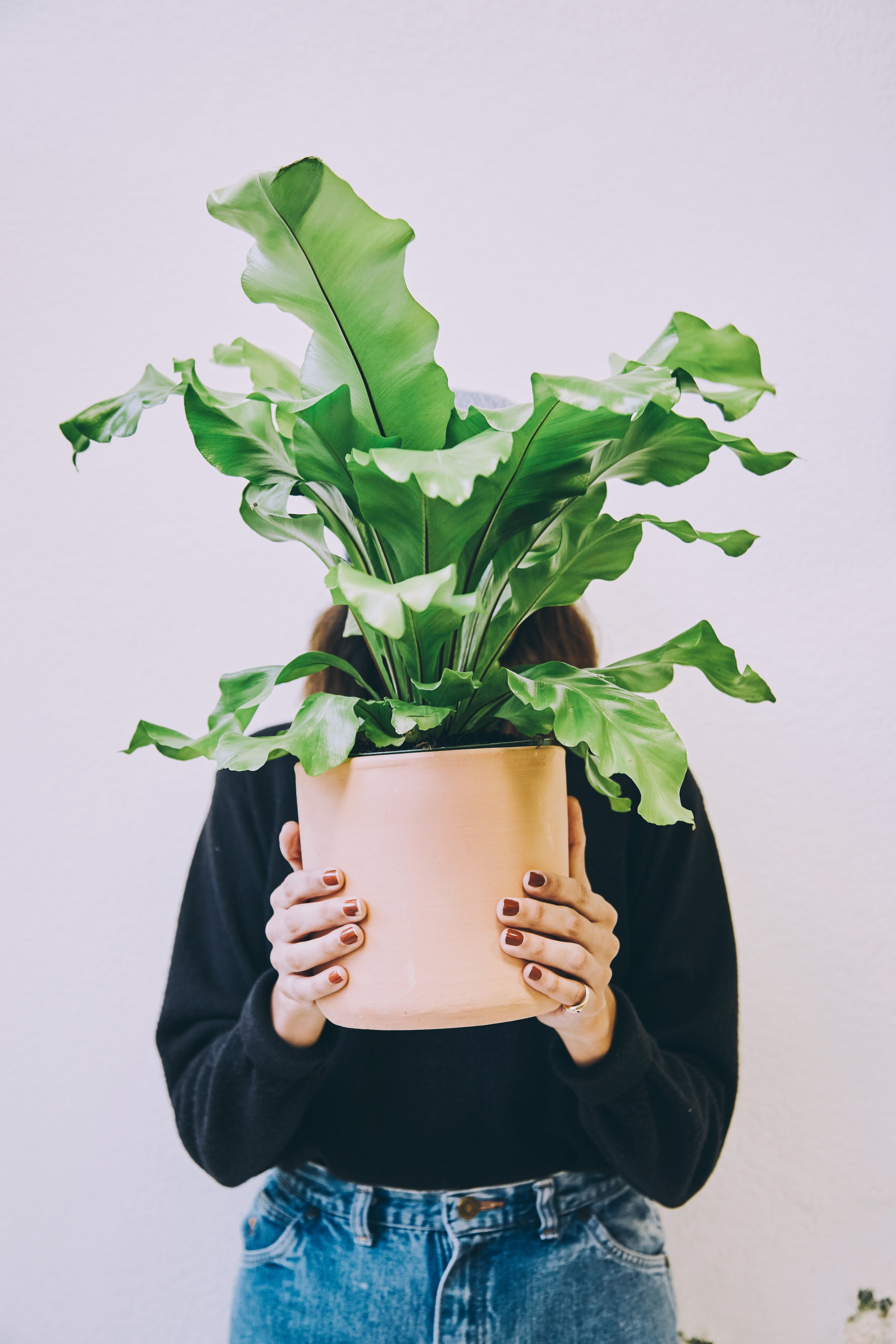 New Growth - Monstera Maven is a new enterprise and we appreciate all our clients! Our list is still growing so check back soon! If you'd like to work with us, please Contact Us below.