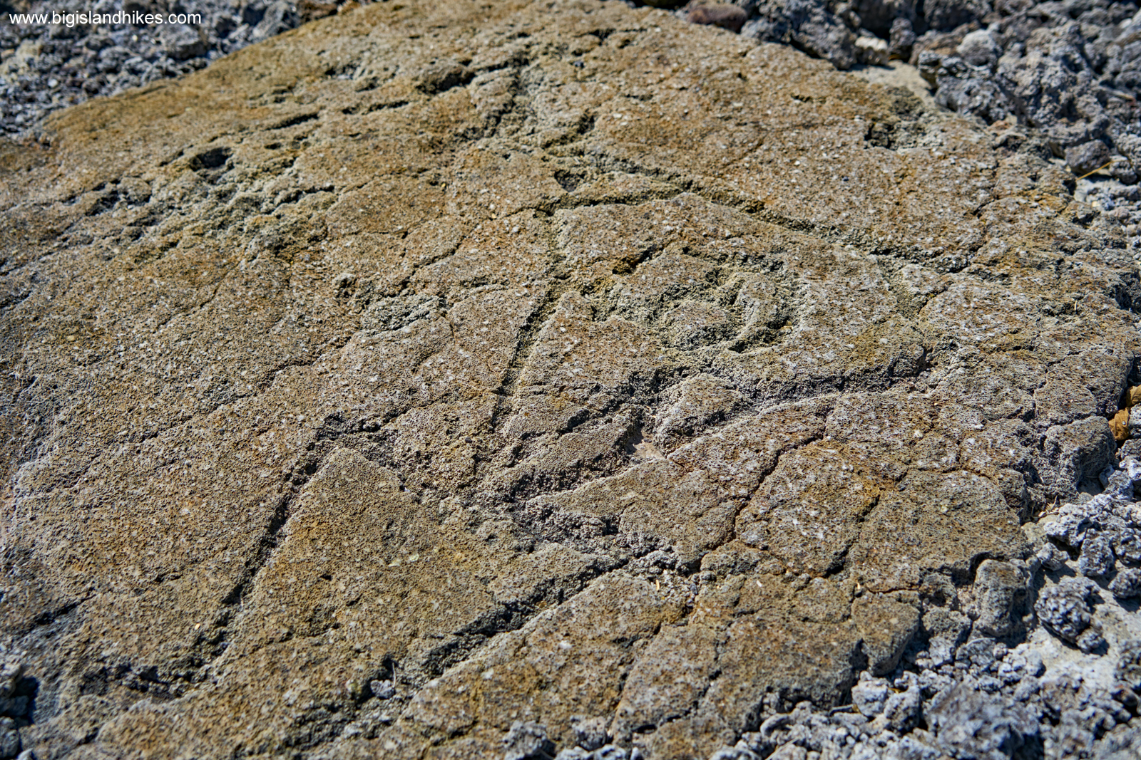 The Helmeted Warrior Petroglyph