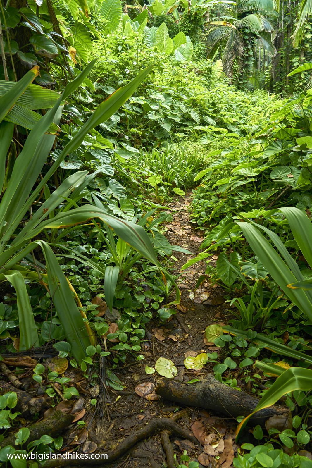 Alakahi Trail