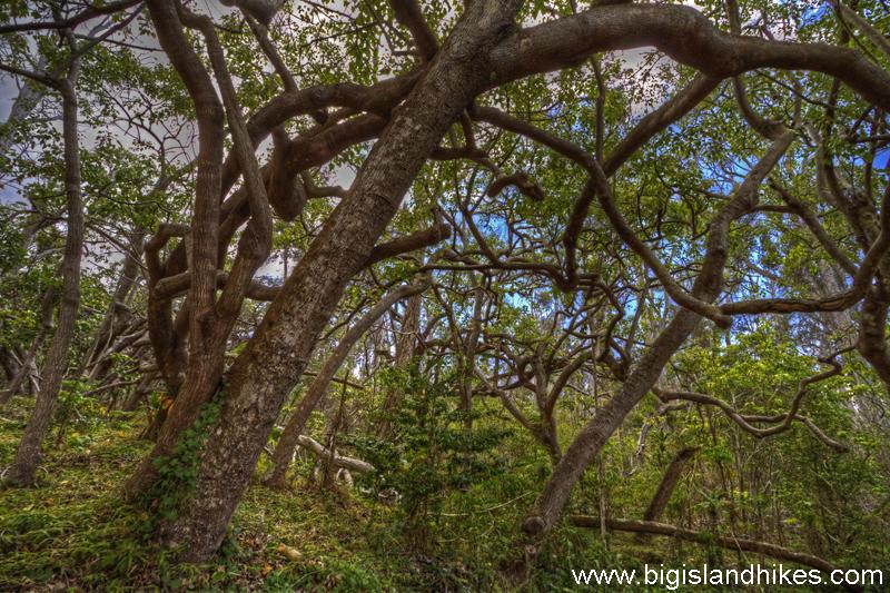 manuka_state_wayside_trees.jpg