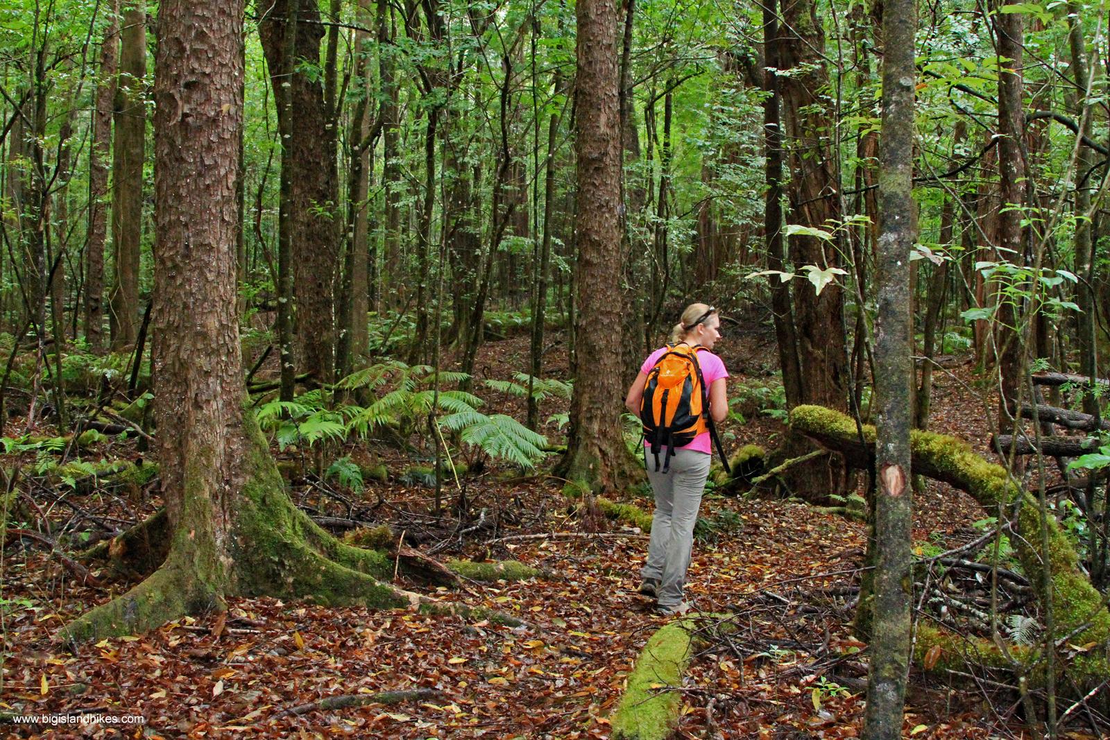 Kalōpā Native Forest State Park & Recreation Area