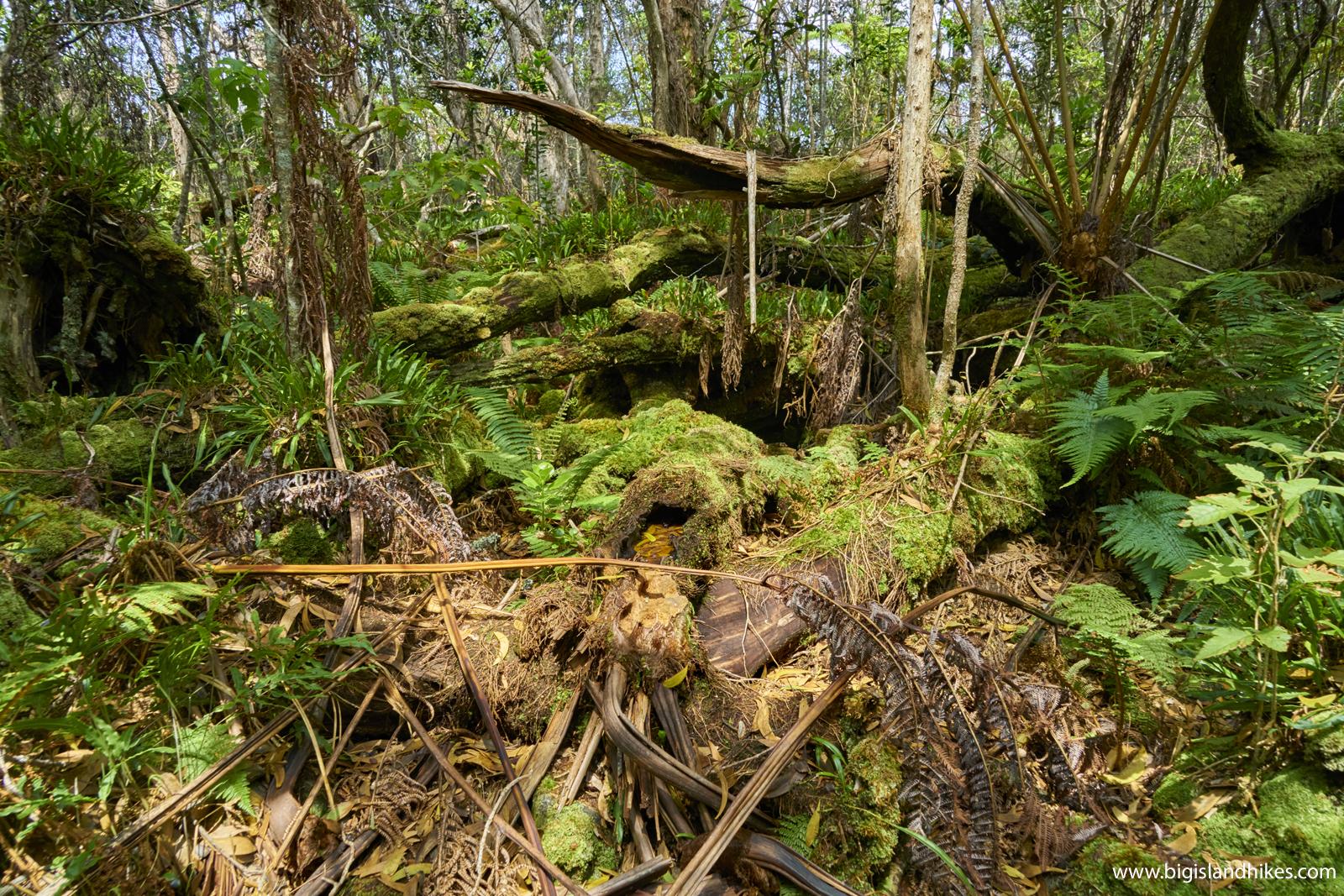 Kaumana Trail