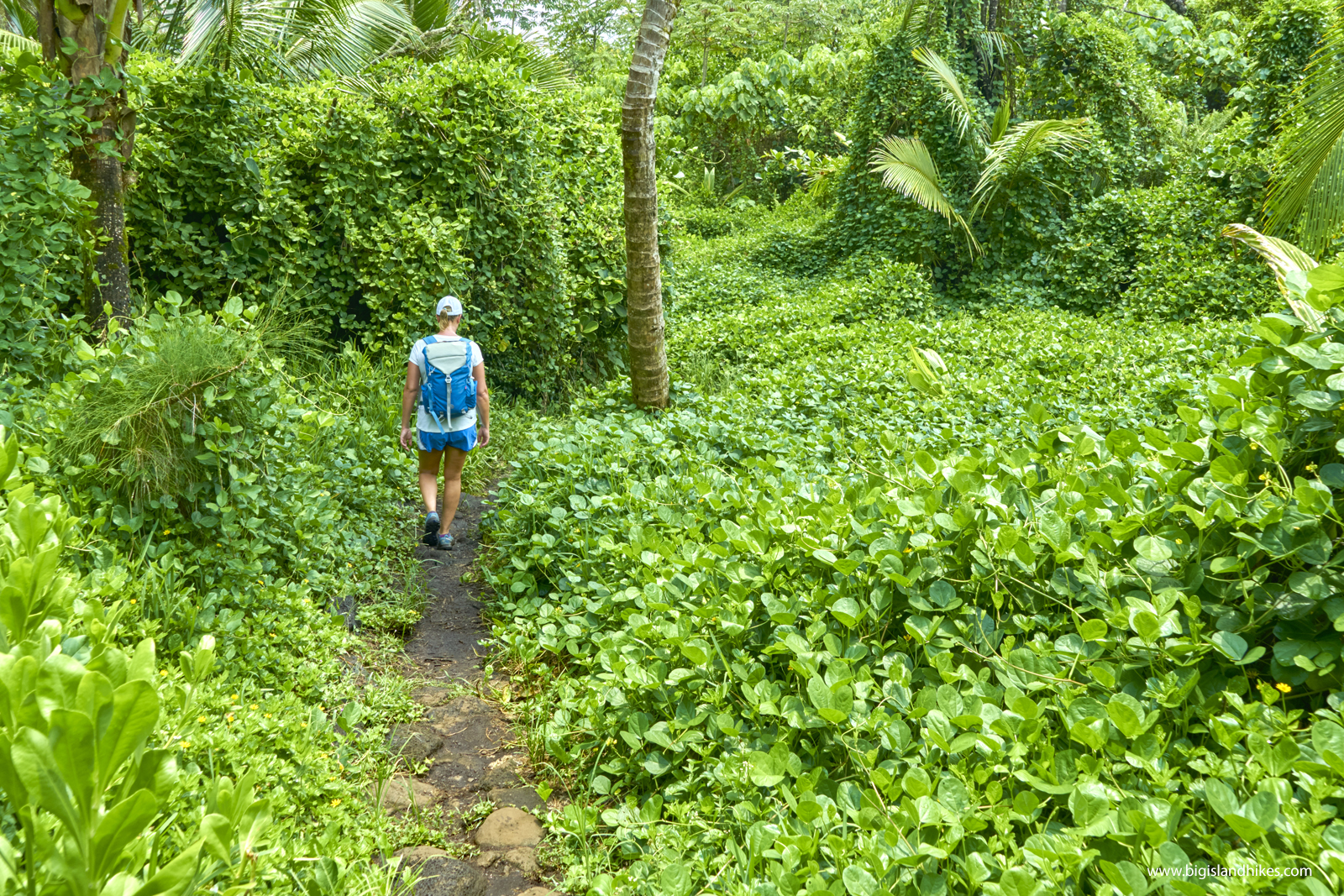 The Puna Trail
