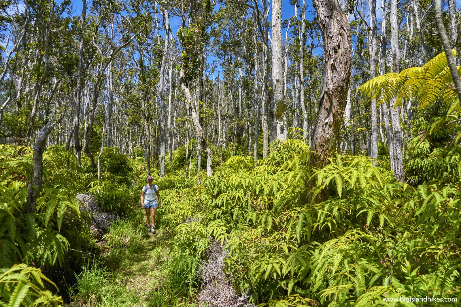 napau trail hiking.jpg