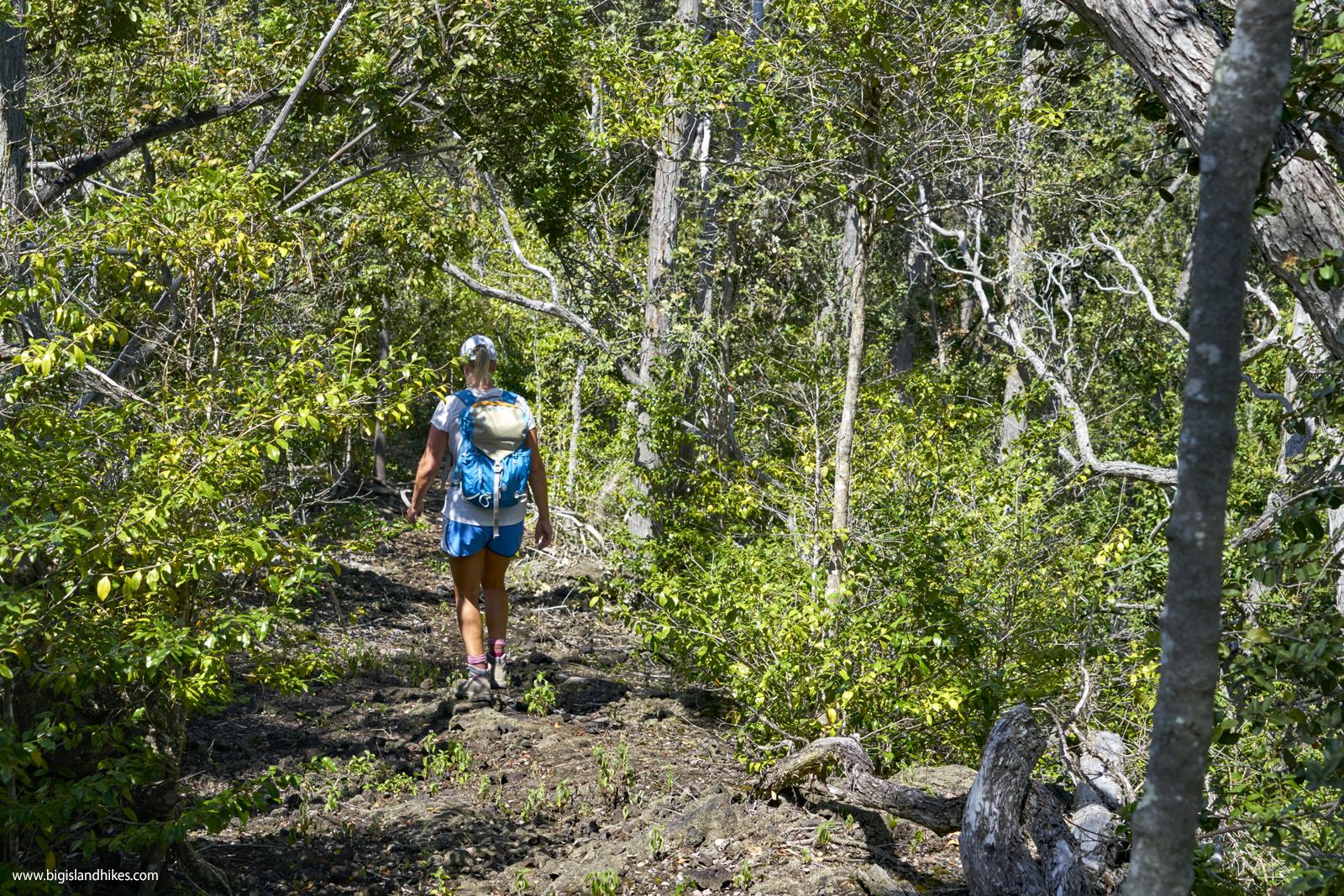 kaheawai trail forest.jpg
