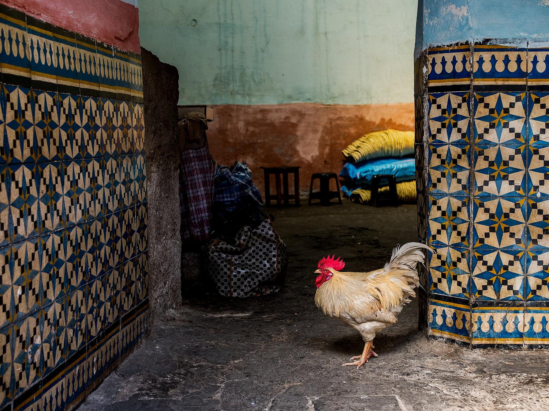 moroccoChicken.jpg