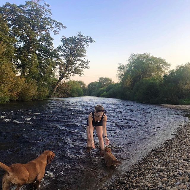 Perfect end to a very busy day  @harrogatefoodanddrinkfestival ...a cooling paddle with the dogs when we got home and a picnic by the river...cheers to the most glorious bank holiday! . . . . #bankholiday #weekend #nature #greatoutdoors #river #summer #Yorkshire #northyorkshire #dogs #dogsofinstagram #sunset #backtonature #eatnatural #nourishthesoul #healthylifestyle #healthyliving #healthy #happyhealthy #happyheart