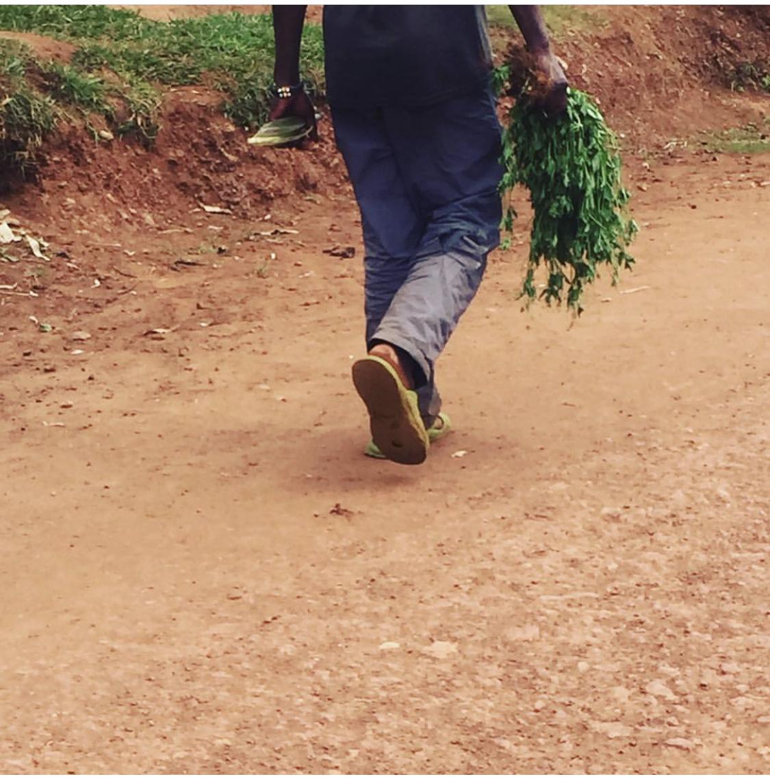 Delicious found for rabit😋😋😋 Kimari.  #sundaywalkrwanda
