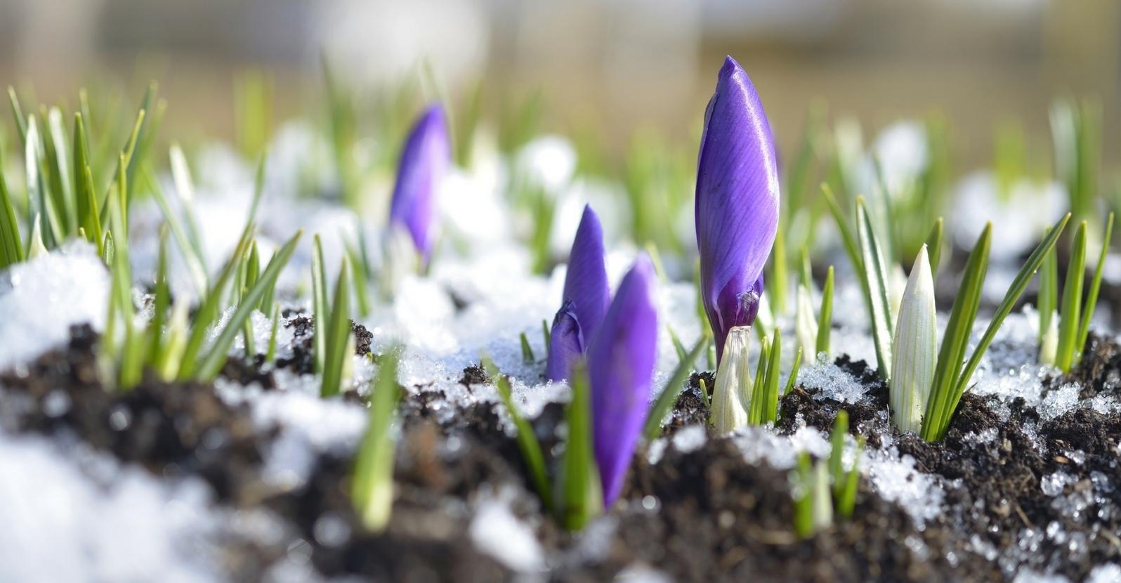 spring tips - lead (2).jpg