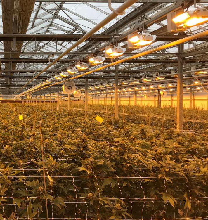 marijuana thc cannabis weed cbd grow stock market legalize