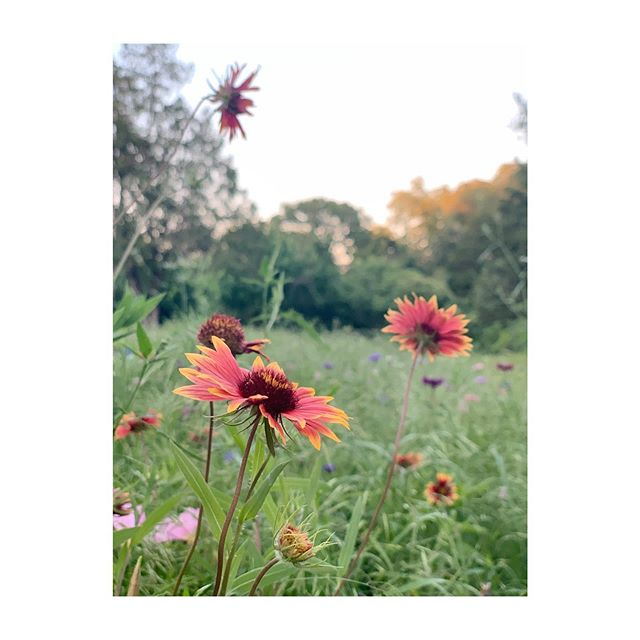 Enjoy some wildflowers for Mother's Day. •  #sonderviewmag #life #mothersday #shotoniphone #visco #wildflowers #oakcliff