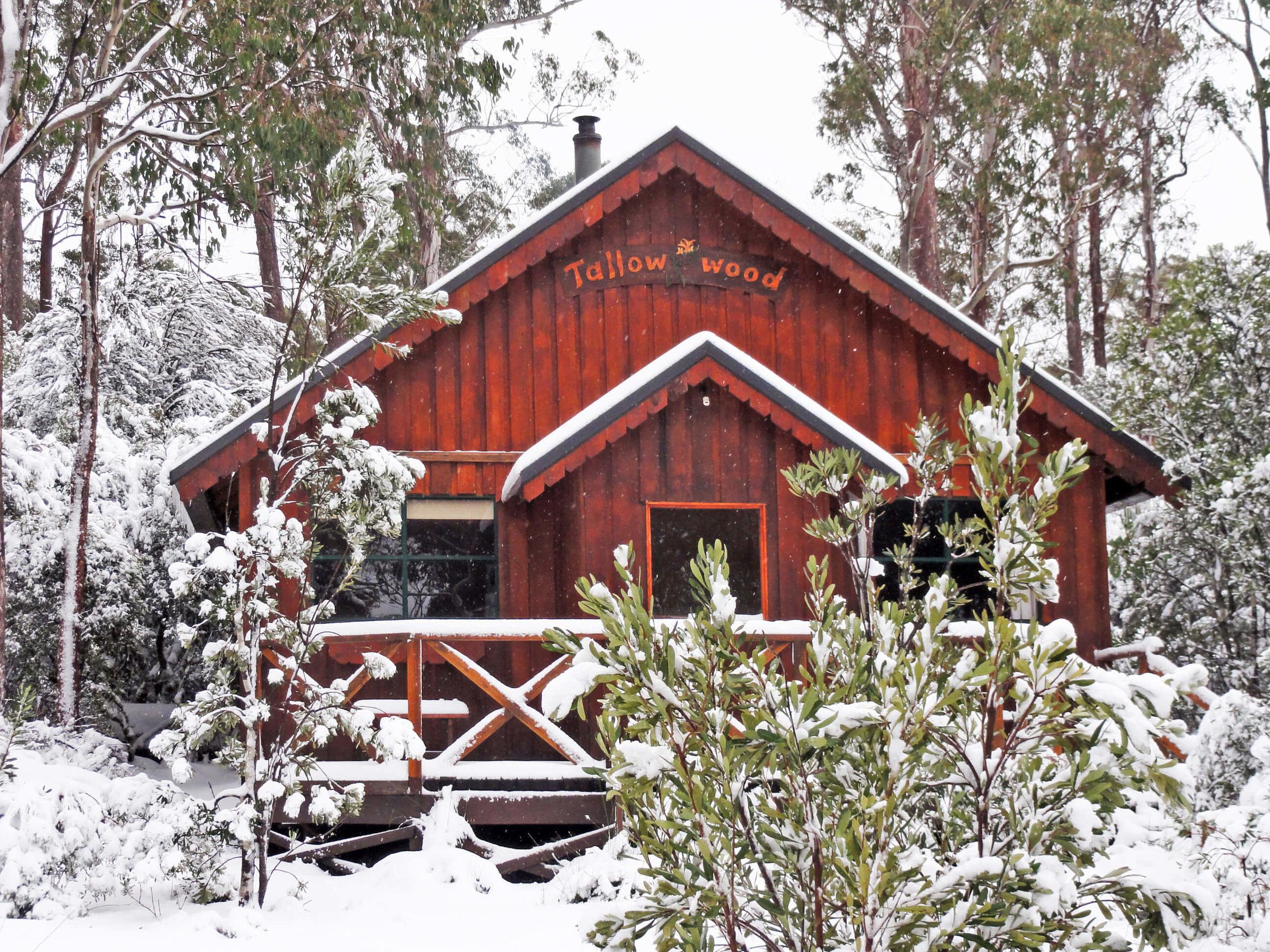 tallowwood in winter copy.jpg