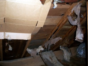 Missing Insulation found in attic at home inspection