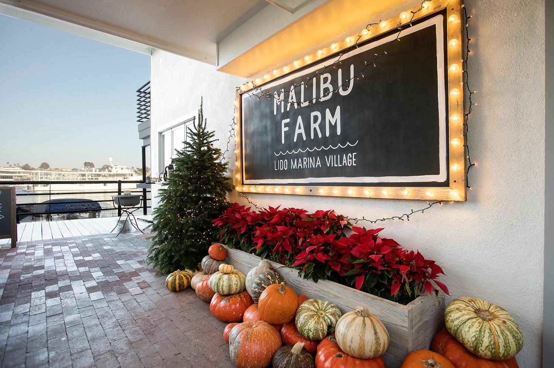 Malibu Farm Header.jpg