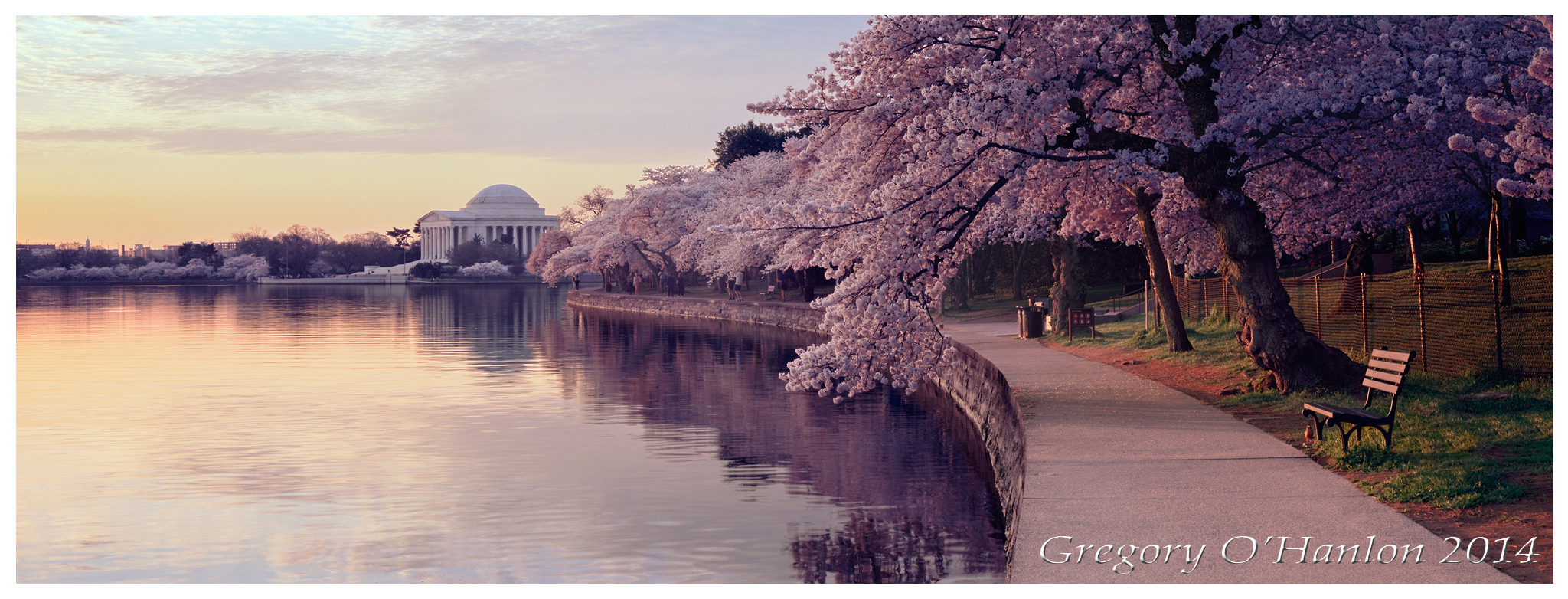Cherry Blossoms - Jefferson Memorial - Sunrise