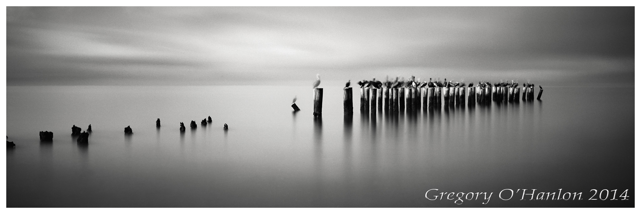 Jetty - Pelicans