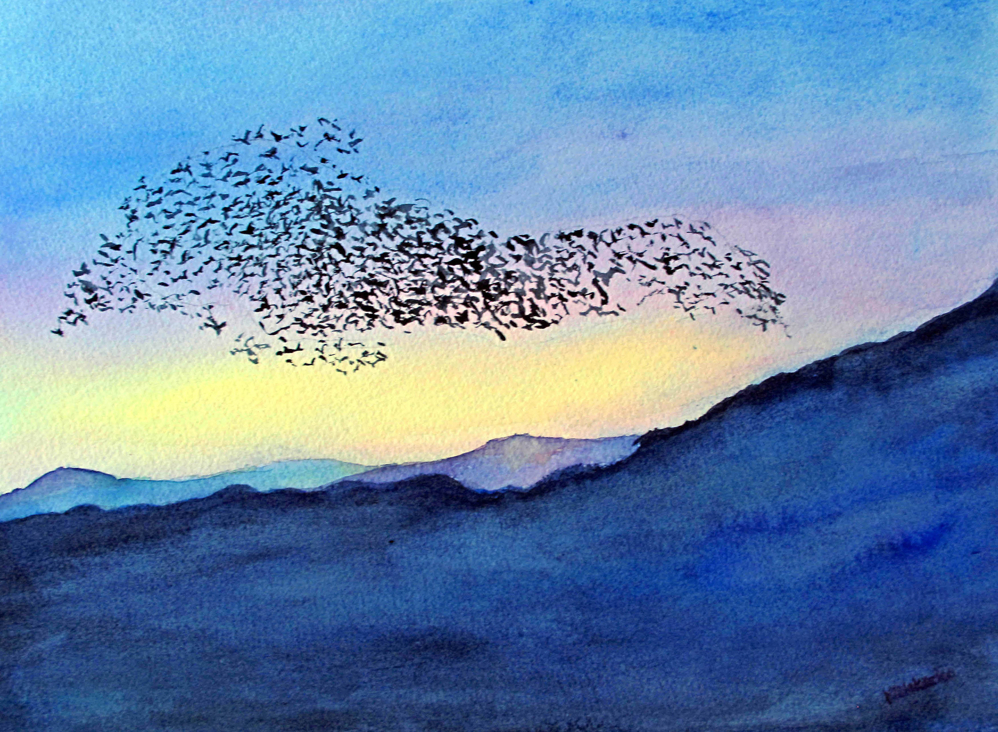 Dance of the Starlings