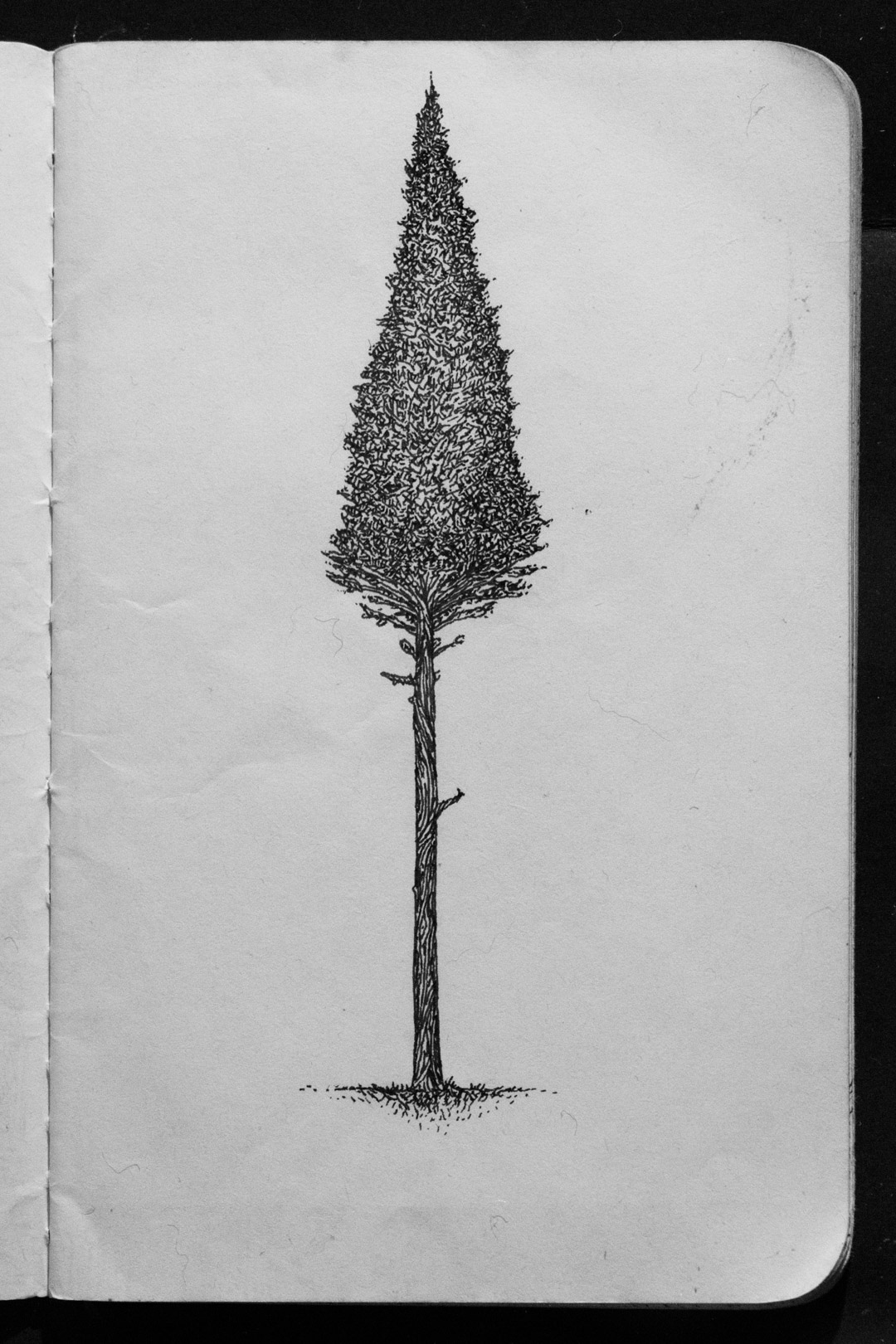 00-02 Original Pine Tree.jpg