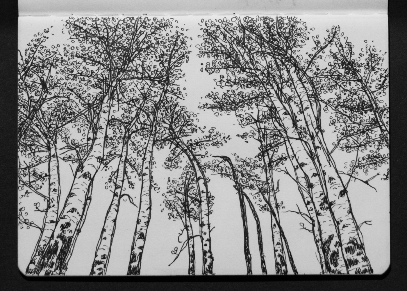 03-03 Backyard Aspen Grove.jpg