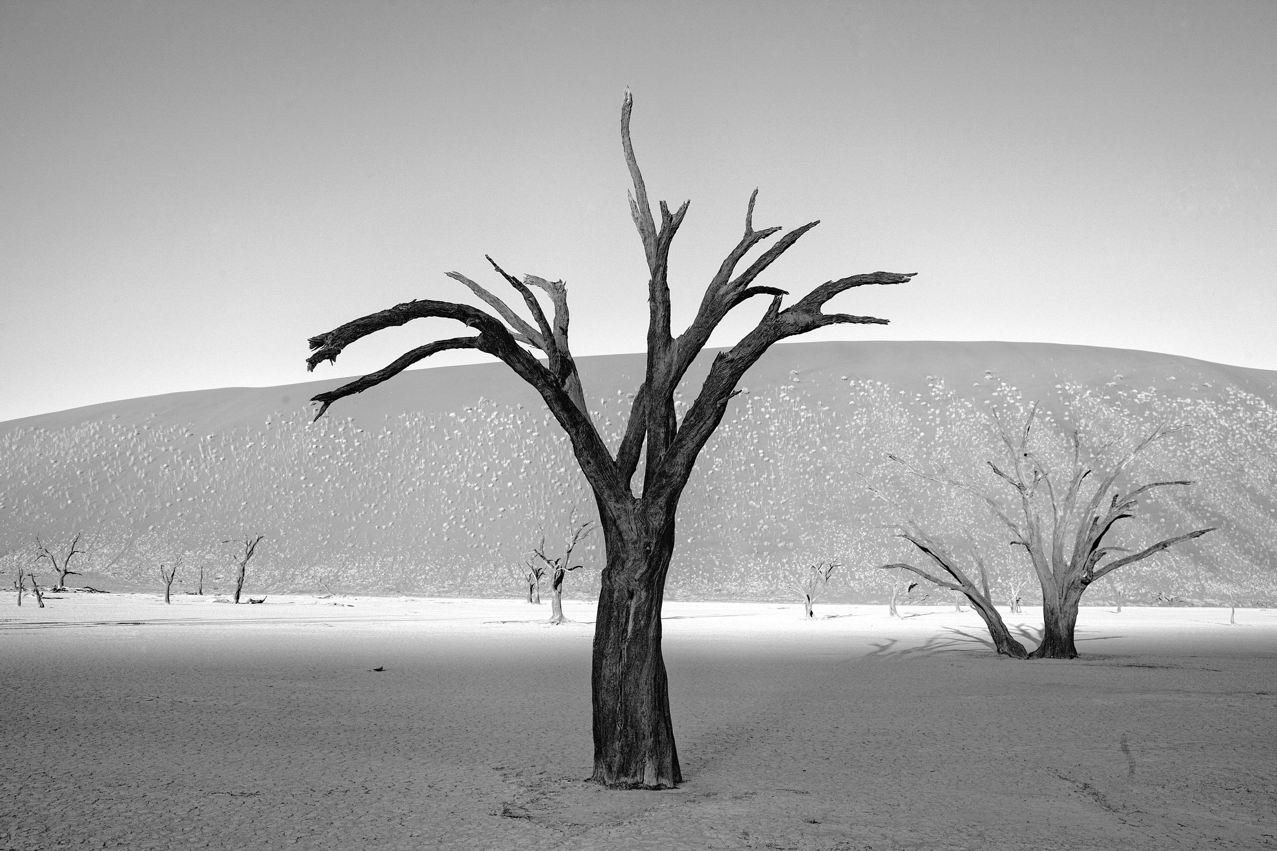 _MG_5772.CR2namibia2008-bw.jpg