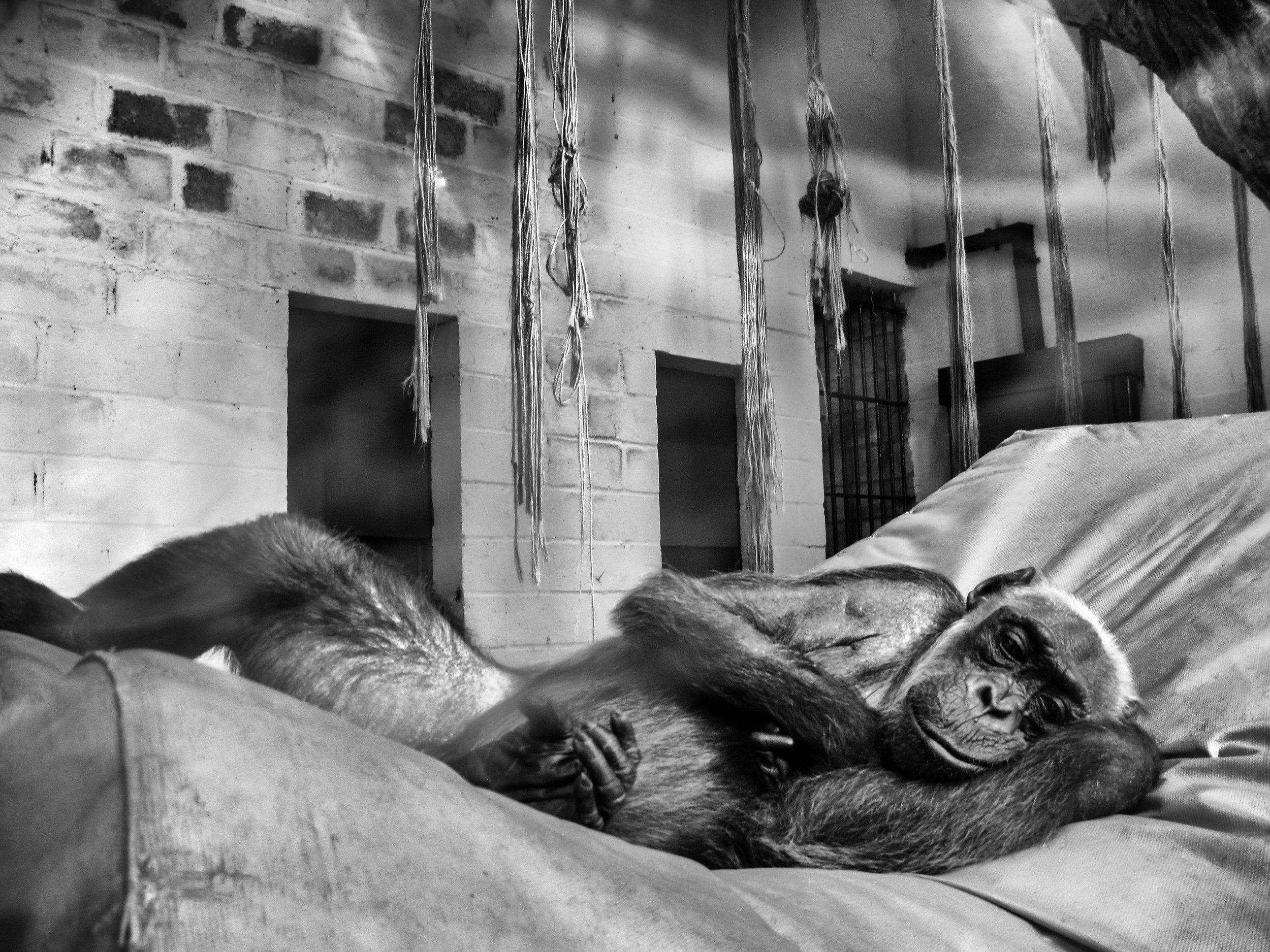 IMG_2273-bw-pancho-zoo-buenos-aires.jpg