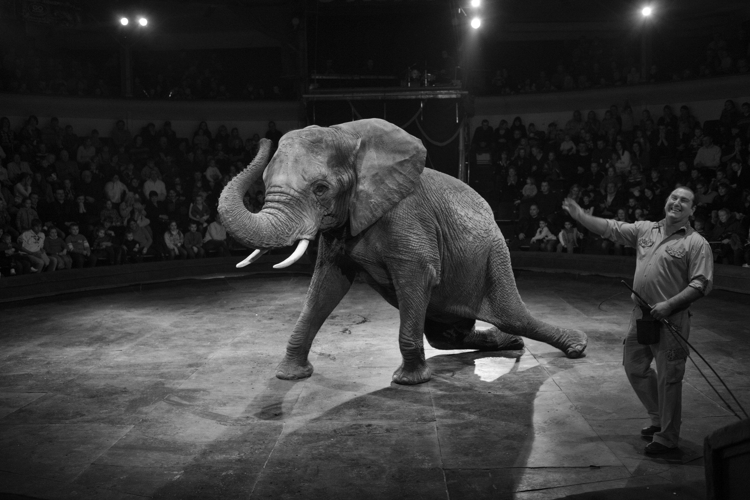 IMG_5685-elefante-circus-OK-ig.jpg