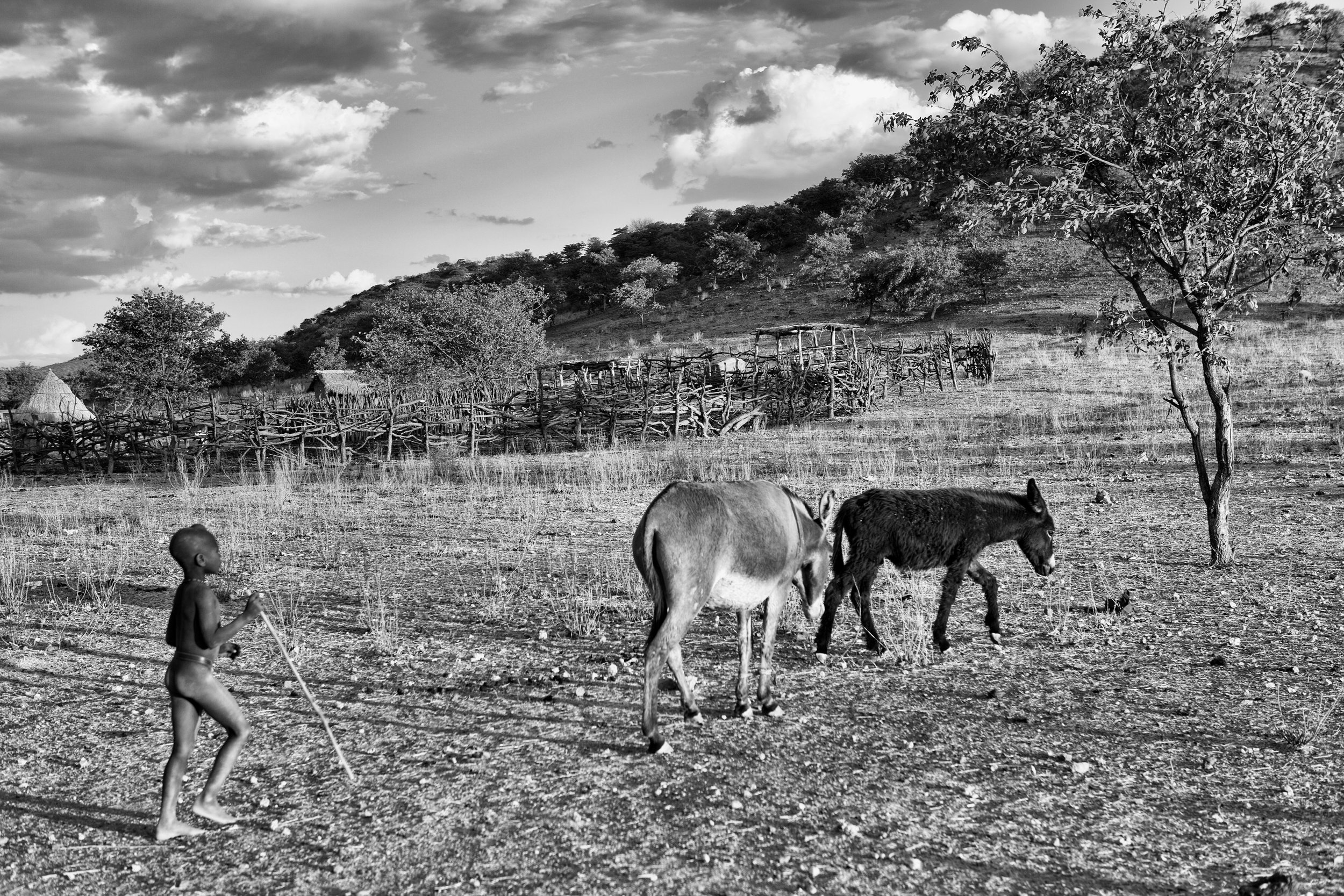 IMG_4487-bw-himba-burro-ig.jpg