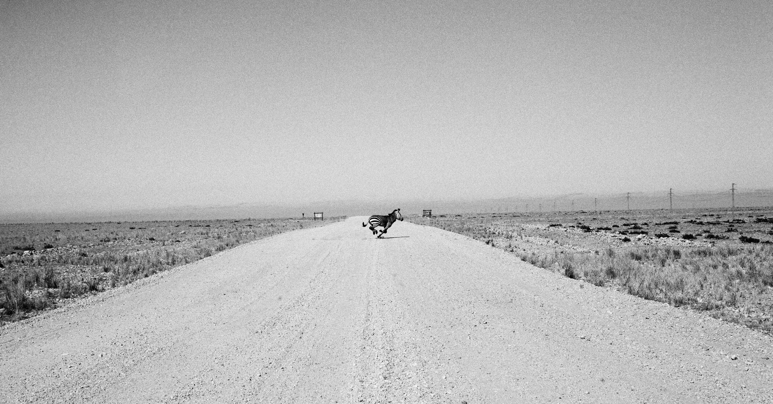 _MG_4812-zebra-running-bw2-crop-ig.jpg