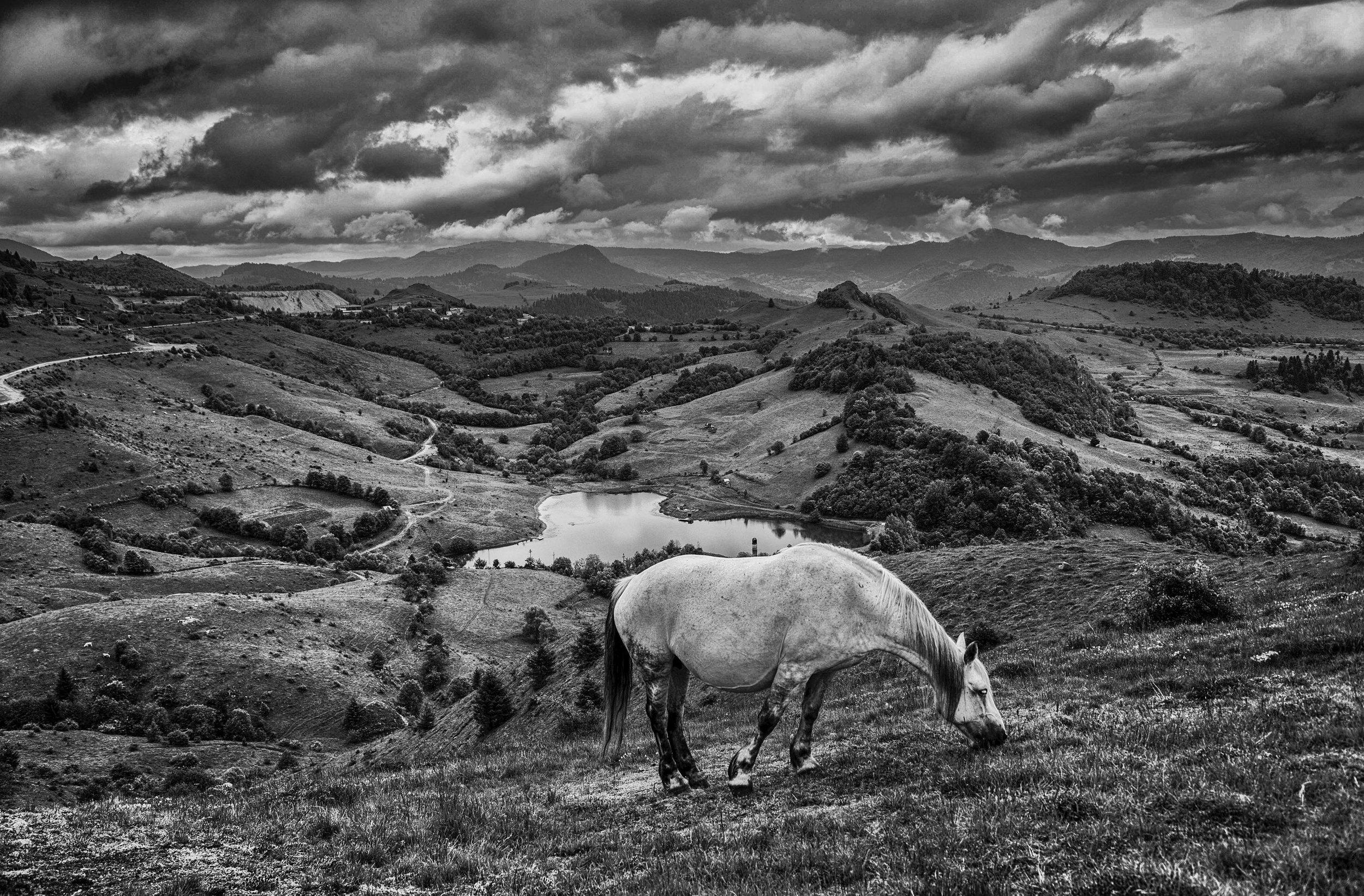 horse-rosia-montana2.jpg