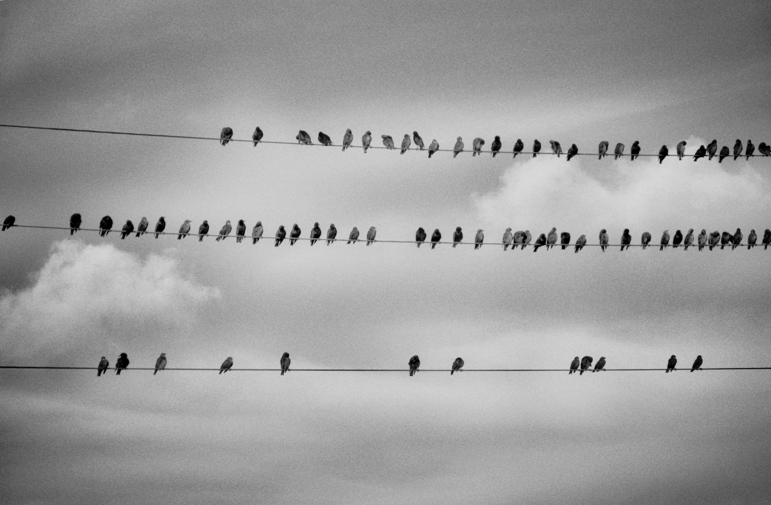 IMG_0833-ig-starlings-latvia.jpg