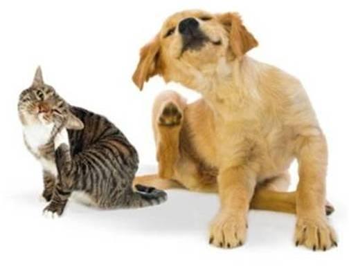 veterinariosintra_desparasitacao19_2.jpg