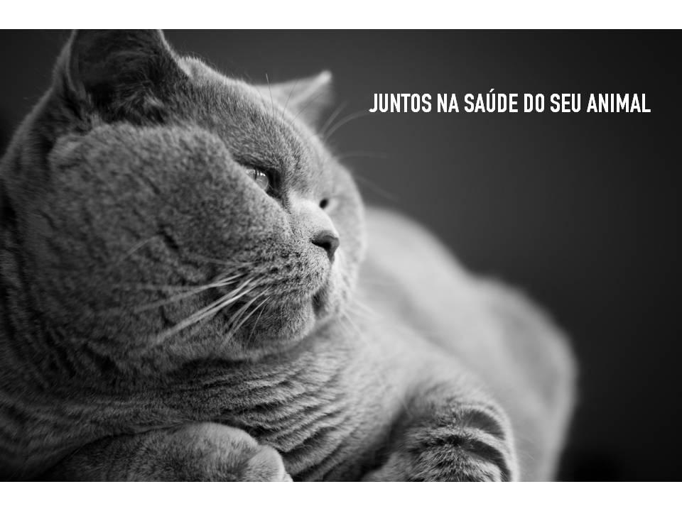 PERSA_TEXTO.jpg