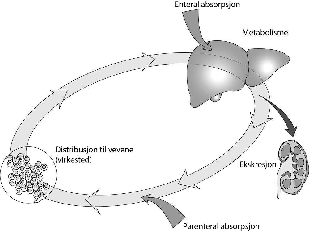 De fire hovedtema i farmakokinetikk er absorpsjon, distribusjon, metabolisme og ekskresjon .